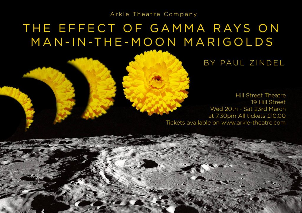 The Effect of Gamma Rays on Man in the Moon Marigolds